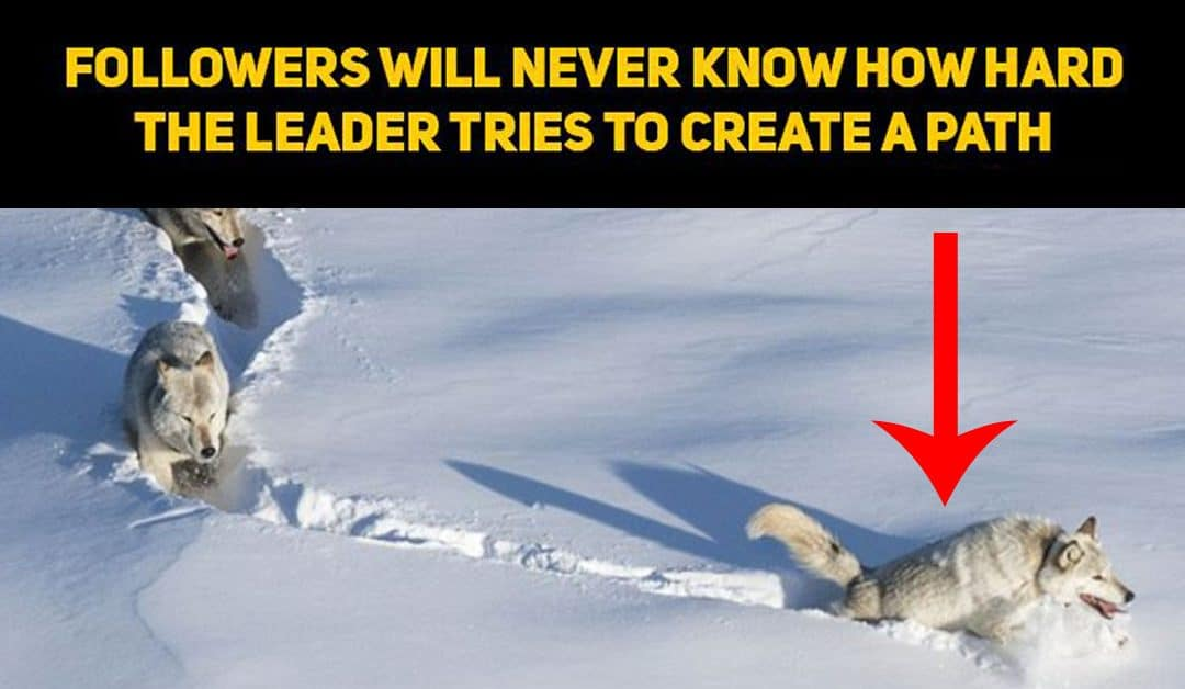 The Year of the Wolf Quit Being the Lone Wolf to Make Your Business Grow
